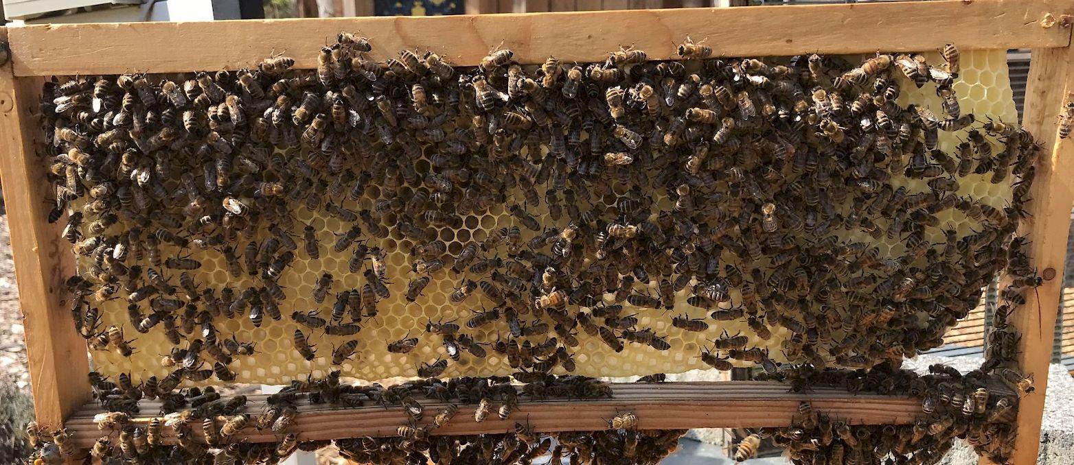 Bienentagebuch: Bienenvolk – GEO Energie Ostalb