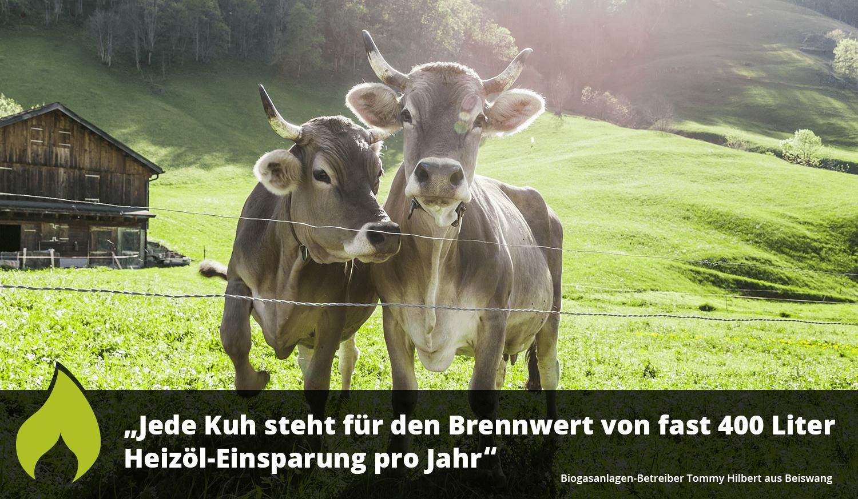 Jede Kuh steht für den Brennwert von fast 400 Liter Heizöl-Einsparung pro Jahr – GEO Energie Ostalb